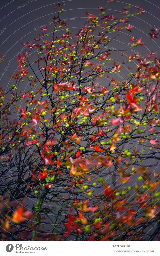autumn evening Evening Goodbye Branch Tree Leaf Multicoloured Dark End Colour Garden Autumn Autumn leaves Sadness Night Nature Park Grief Plant Exchange Twig