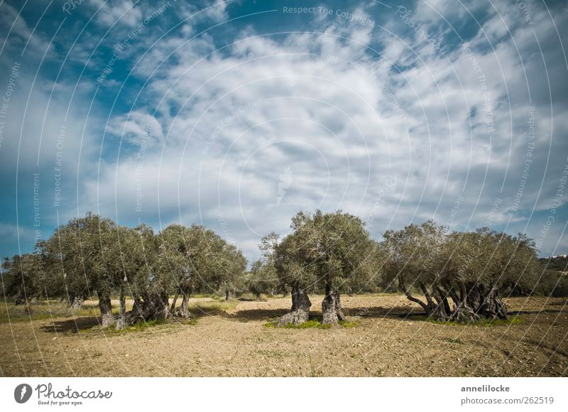 Sky Nature Old Vacation & Travel Tree Summer Clouds Environment Landscape Field Climate Tourism Growth Trip Beautiful weather Agriculture