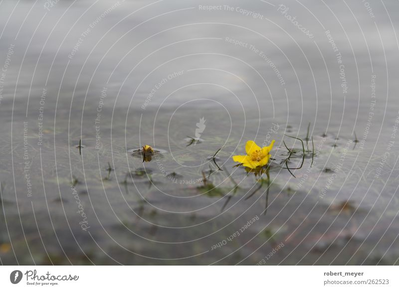 Water Plant Calm Yellow Meadow Autumn Cold Blossom Sadness Lake Dream Power Lie Idyll Lakeside Serene