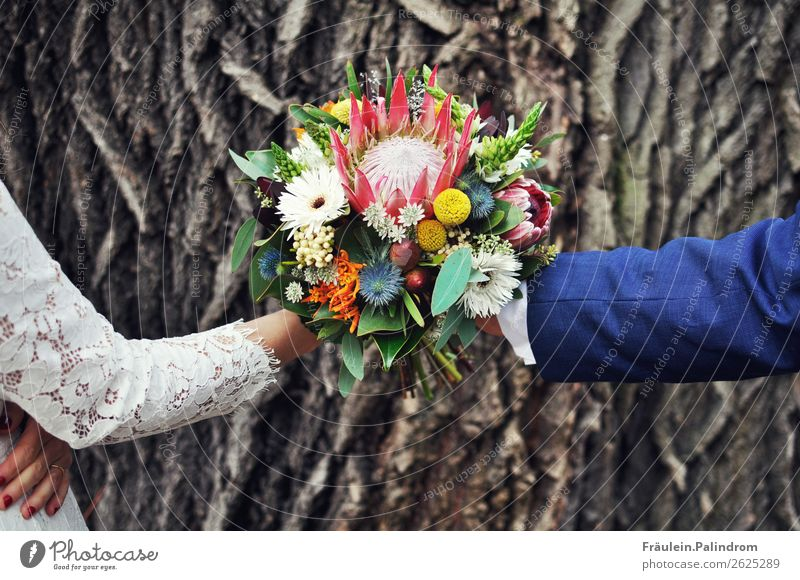 bridal couple Happy Event Parents Adults Family & Relations Couple Partner Life Arm Hand 2 Human being 18 - 30 years Youth (Young adults) Tree Flower Love