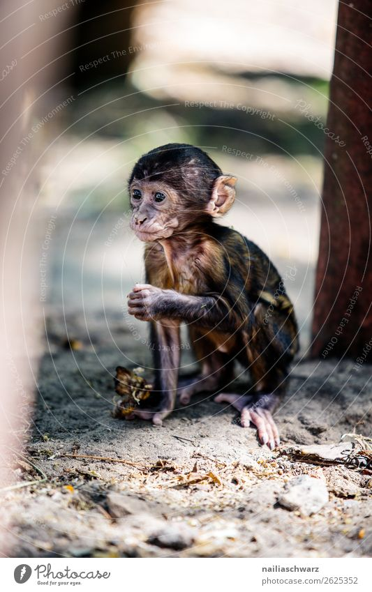 baby monkey Animal Summer Garden Park Wild animal Zoo rhesus monkey macaque Monkeys 1 Baby animal Observe Looking Playing Happiness Natural Curiosity Cute Joy