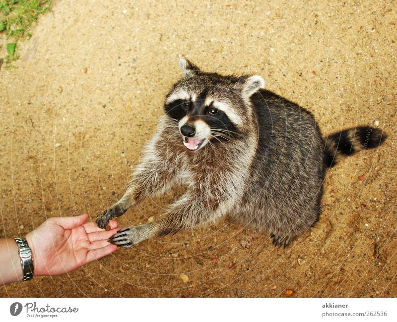Nature Plant Animal Environment Sand Bright Earth Wild animal Elements Pelt Animal face Raccoon