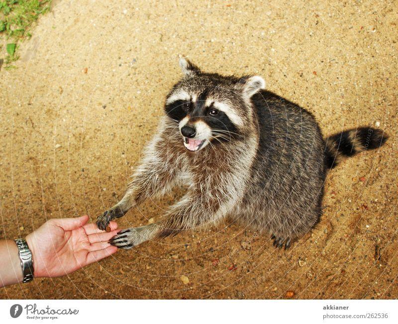 Nature Plant Animal Environment Sand Bright Earth Wild animal Elements Pelt Animal face Raccoon