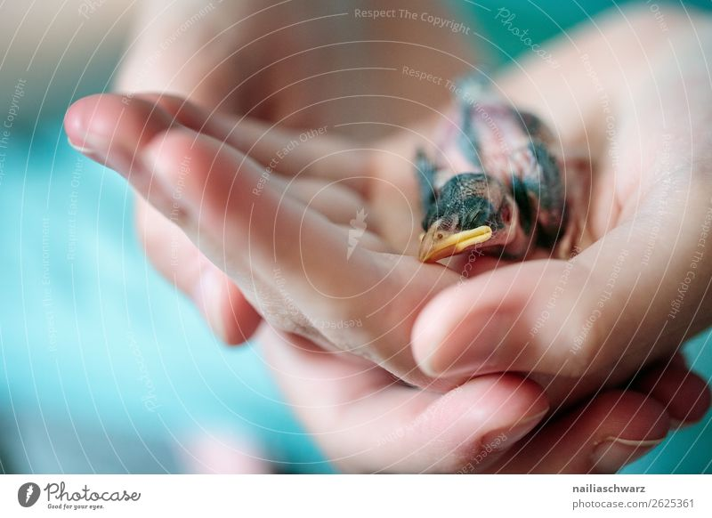 Human being Nature Naked Hand Animal Environment Love Natural Small Bird Wild animal Fingers Warm-heartedness Cute Help Protection