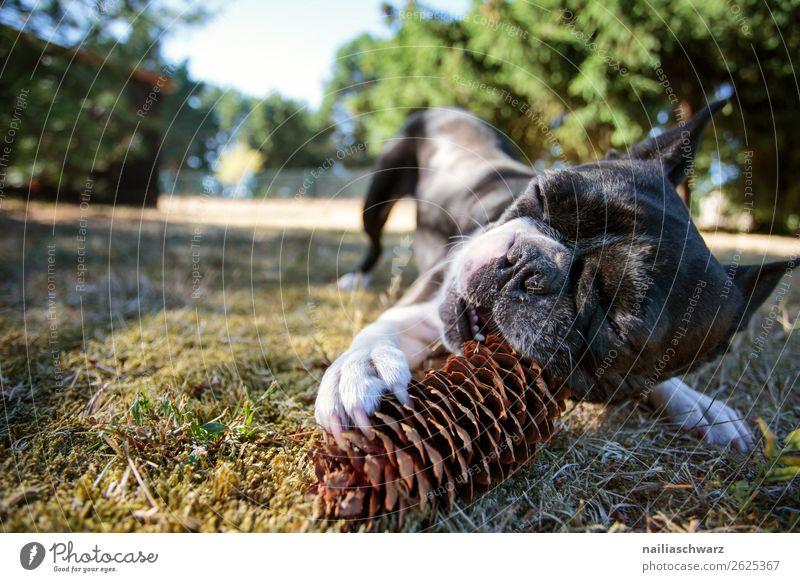 Vacation & Travel Nature Dog Plant Beautiful Green Landscape Animal Joy Black Funny Meadow Movement Happy Grass Garden