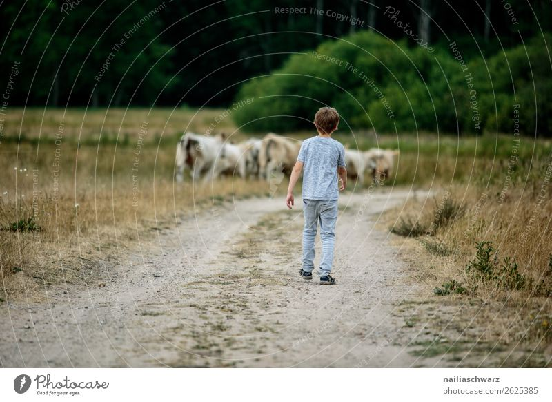 summer Agriculture Forestry Human being Child Boy (child) Body 1 8 - 13 years Infancy Environment Nature Landscape Summer Grass Bushes Field Animal Cow Herd