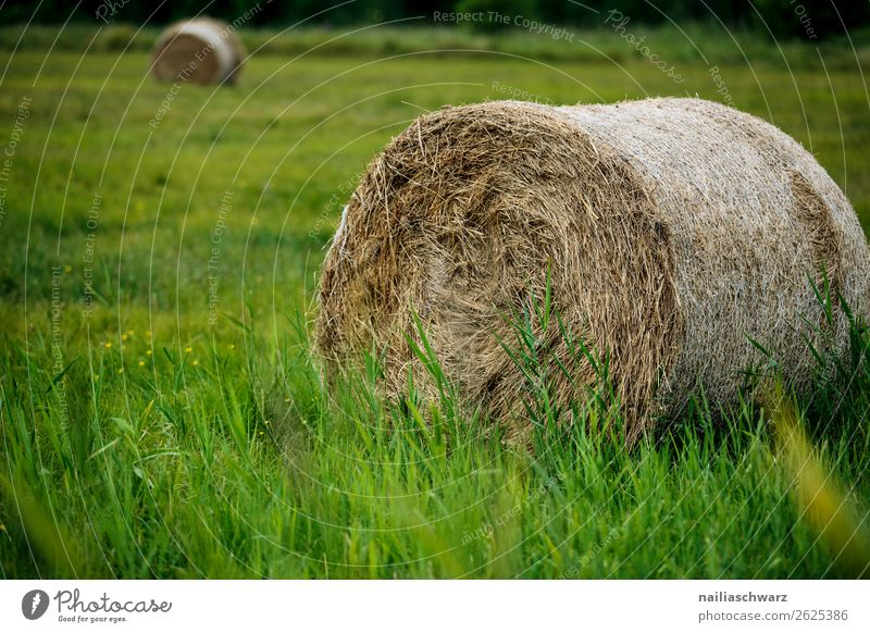 hay bales Vacation & Travel Tourism Trip Summer Summer vacation Agriculture Forestry Environment Nature Landscape Plant Grass Mecklenburg-Western Pomerania