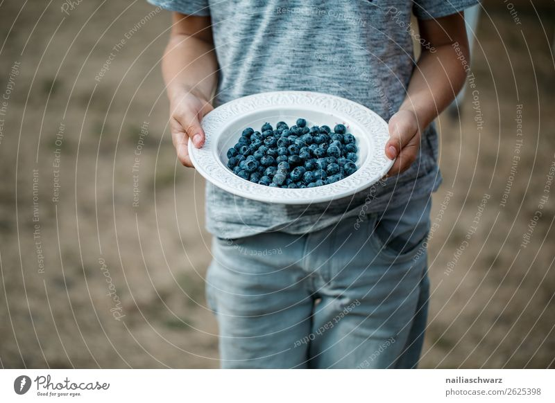 blueberries Food Fruit Dessert Blueberry Nutrition Organic produce Vegetarian diet Diet Plate Bowl Healthy Healthy Eating Summer Human being Child Boy (child)