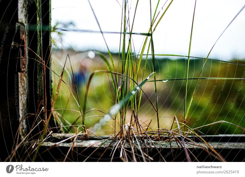 transience Environment Nature Drops of water Summer Grass Mecklenburg-Western Pomerania Germany Europe Industrial plant Factory Military building Facade Window