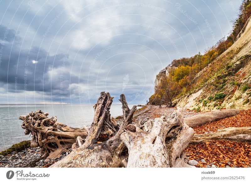 Vacation & Travel Nature Blue Water Landscape Tree Ocean Relaxation Clouds Forest Beach Autumn Environment Coast Tourism Stone