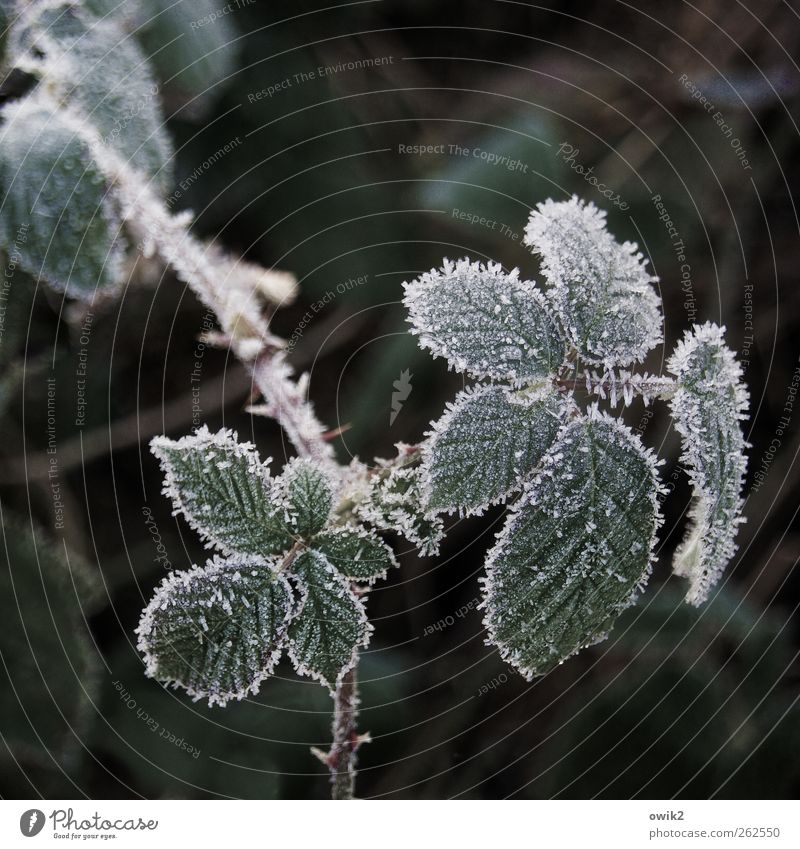 Nature Plant Winter Leaf Loneliness Environment Landscape Cold Small Weather Ice Wait Elegant Natural Climate Fresh