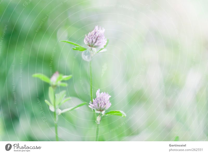 Nature Green Beautiful Plant Summer Flower Leaf Environment Garden Blossom Spring Soft Violet Beautiful weather Delicate Smooth