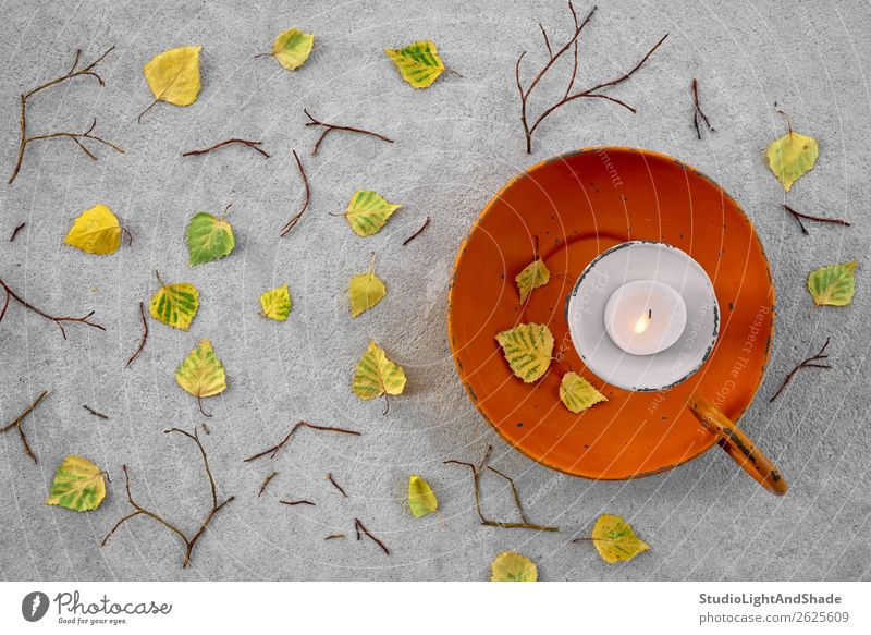 Autumn leaves and cozy candlelight Nature Old Colour Beautiful Tree Leaf Forest Warmth Yellow Natural Garden Lamp Orange Gray Moody