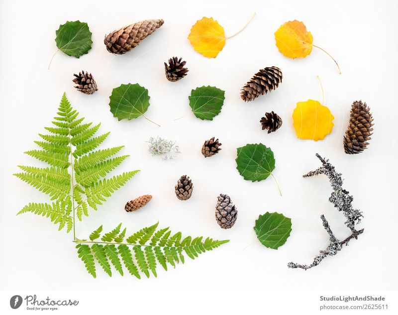 Scandinavian forest flat lay Leisure and hobbies Summer Garden Gardening Agriculture Forestry Nature Plant Autumn Tree Moss Fern Leaf Foliage plant Wild plant