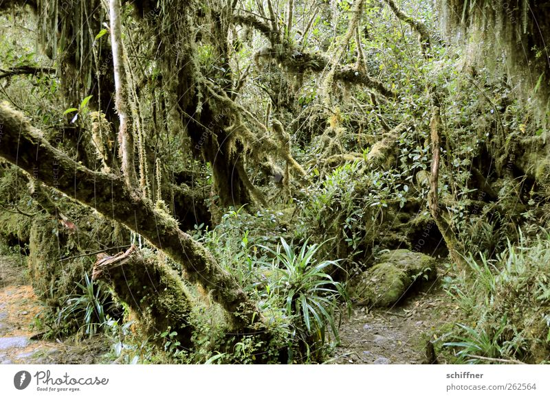 Back there - an animal! Environment Nature Plant Tree Grass Bushes Moss Foliage plant Wild plant Exotic Virgin forest Green Great burr Fern Undergrowth Muddled