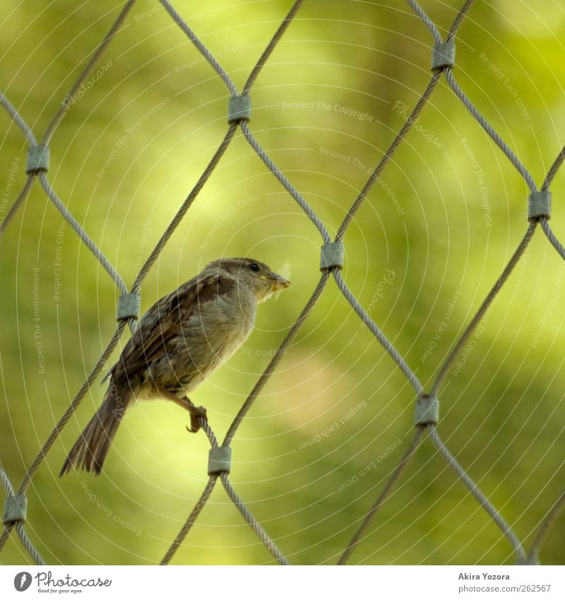 Nature Green Animal Brown Bird Sit Wild animal Observe Curiosity Discover Silver