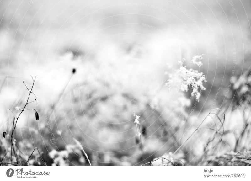 Nature Plant Winter Flower Meadow Cold Snow Grass Small Weather Ice Field Fog Climate Frost Transience