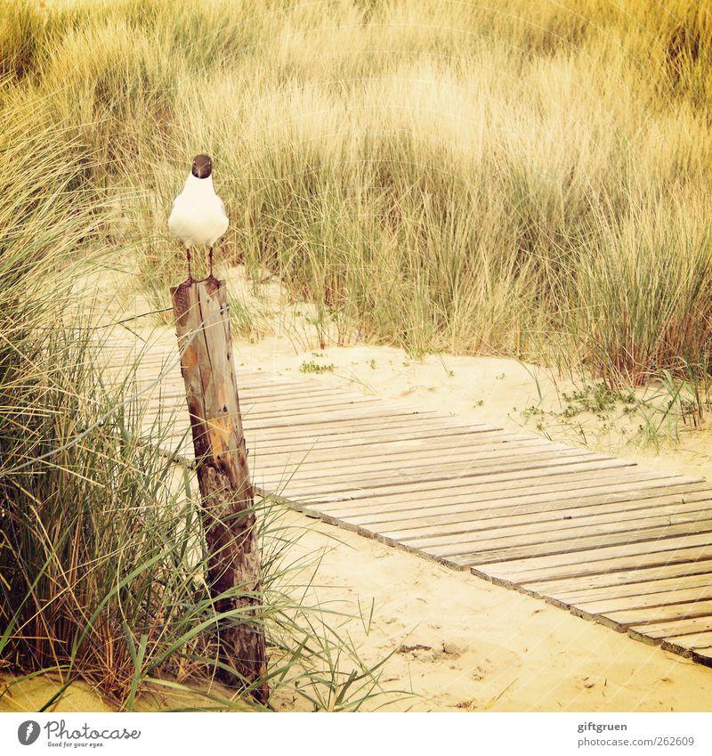 Nature Plant Ocean Beach Animal Environment Landscape Grass Lanes & trails Sand Coast Bird Wait Sit Bushes Elements