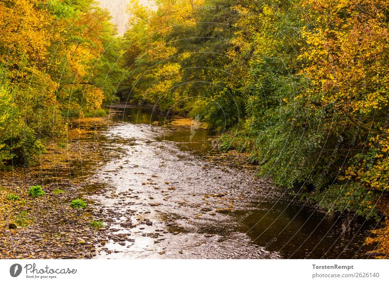 At the river Nature Landscape Plant Water Autumn Forest Waves River Multicoloured Yellow Green Orange Red Bad Blankenburg river landscape county