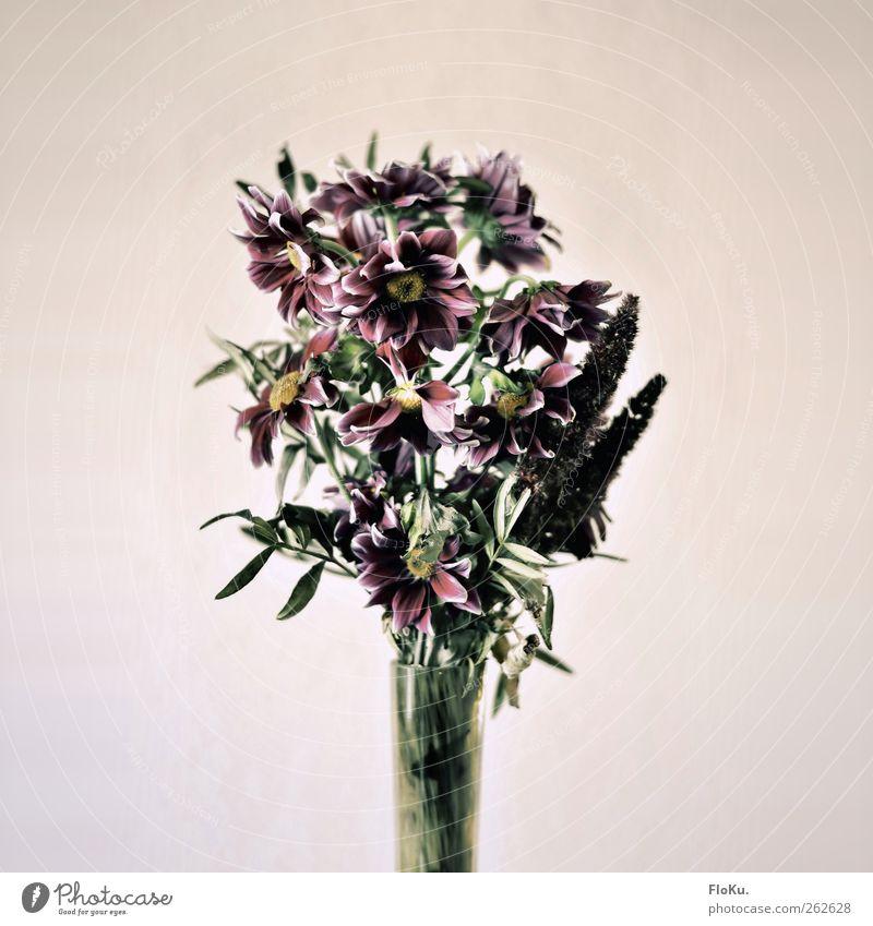 Old Green Plant Flower Death Sadness Pink Gloomy Retro Grief Kitsch Bouquet Trashy Beige Limp Vase