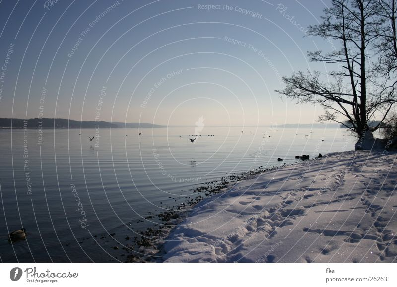 Blue Snow Lake Glittering Snowscape Starnberg Lake Starnberg