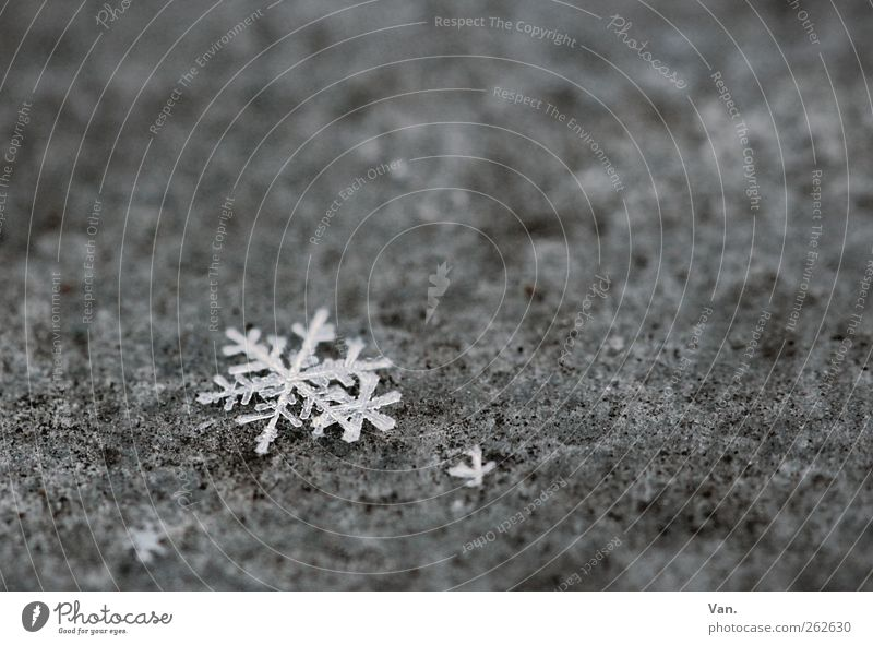 the last flakes Nature Winter Ice Frost Snow Metal Cold Gray White Snowflake Star (Symbol) Ice crystal Colour photo Subdued colour Exterior shot Close-up Detail