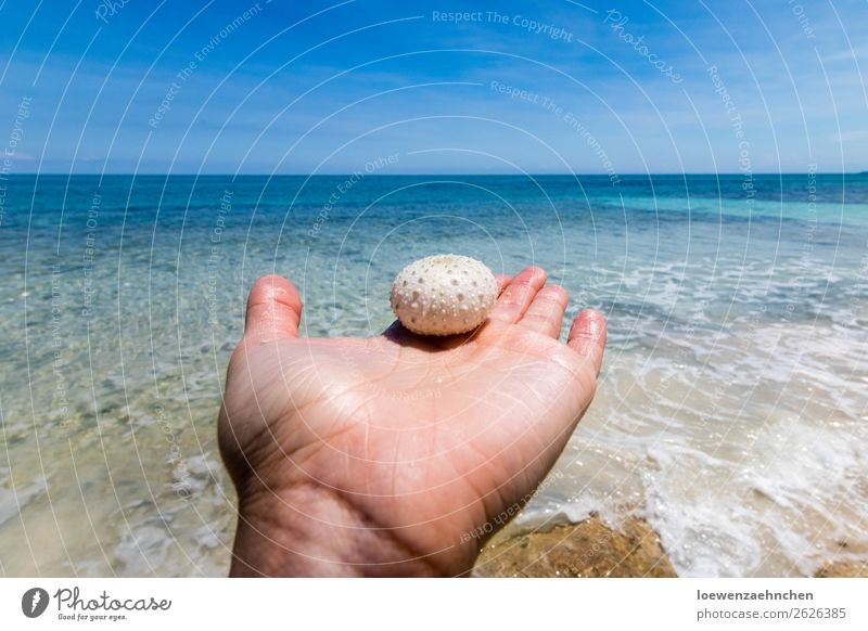 Sea urchins in the Caribbean Hand Nature Sand Water Summer Beautiful weather Beach Ocean Dead animal 1 Animal Observe Discover Vacation & Travel Exceptional