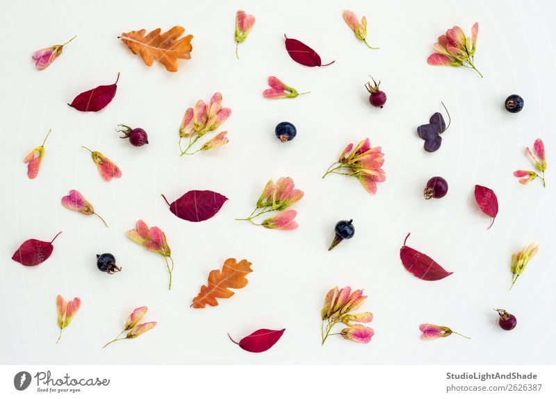 Autumn nature flat lay in purple tones Fruit Design Leisure and hobbies Summer Garden Gardening Art Work of art Nature Plant Tree Flower Leaf Blossom