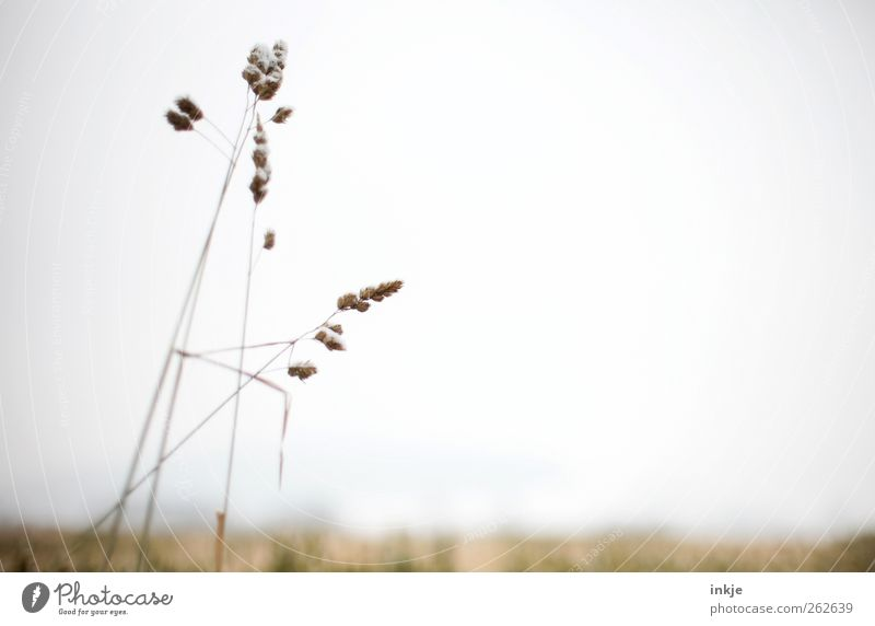 Sky Nature Plant Summer Winter Loneliness Far-off places Environment Meadow Landscape Autumn Grass Air Horizon Brown Field