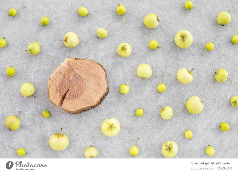 Wild apples and apple tree stump with copy space Nature Healthy Eating Summer Colour Green Tree Food Wood Autumn Yellow Natural Art Garden Copy Space Gray Fruit