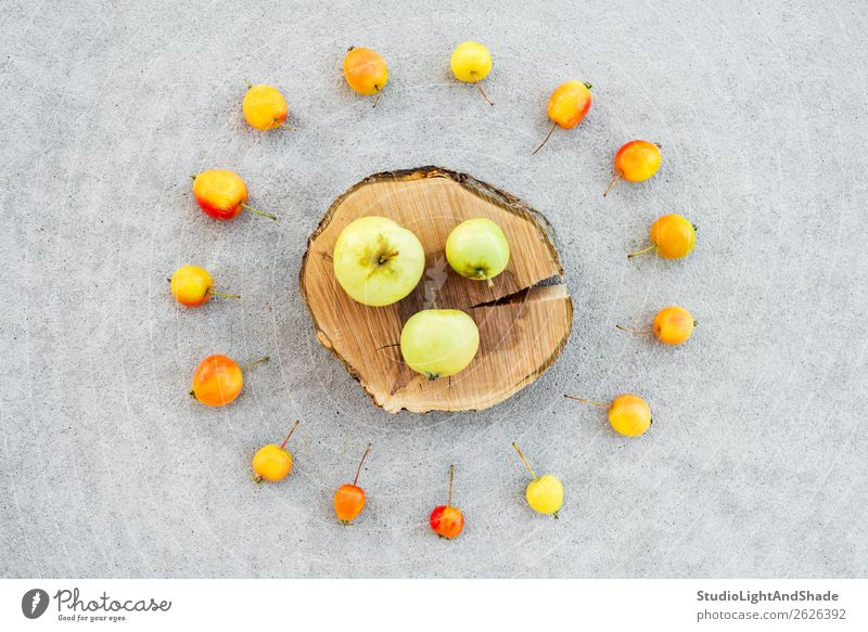 Apple tree stump and colorful wild apples Nature Healthy Eating Summer Colour Red Tree Food Wood Autumn Yellow Natural Small Garden Orange Gray Fruit