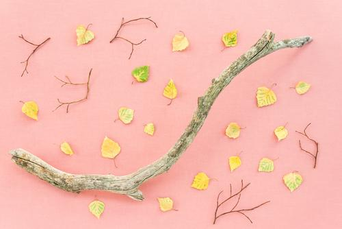 Fallen leaves and dry tree branch on pink background Design Beautiful Leisure and hobbies Garden Gardening Agriculture Forestry Art Work of art Nature Plant