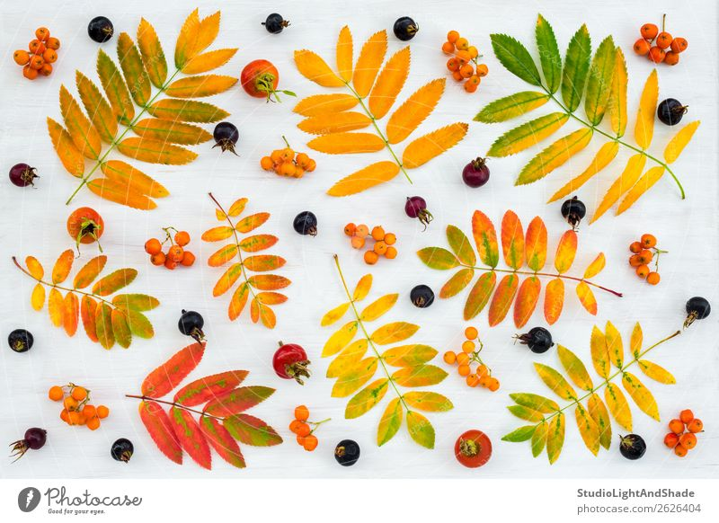 Colorful autumn flat lay with leaves and berries Fruit Design Beautiful Leisure and hobbies Garden Gardening Agriculture Forestry Art Work of art Nature Plant
