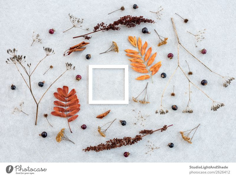 White frame and dry autumn plants on concrete background Fruit Elegant Style Design Beautiful Garden Art Work of art Nature Plant Autumn Tree Leaf Wild plant