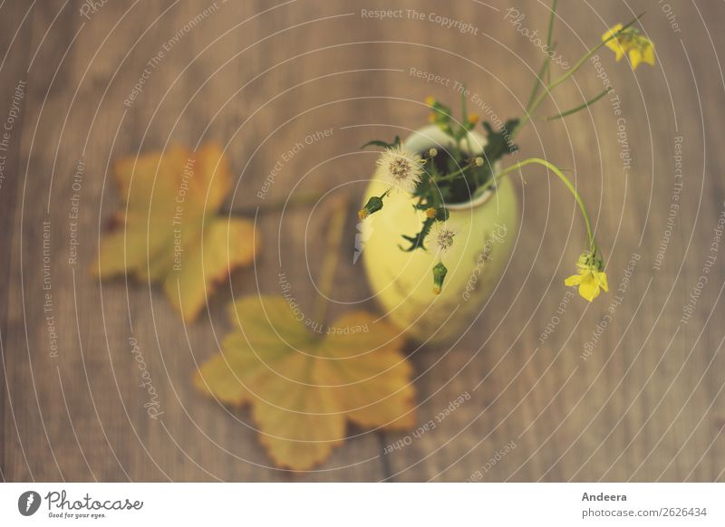 Autumnal still life with plants and vase on a blurred wooden background Flat (apartment) Decoration Table Nature Plant Warmth flaked bleed Wild plant Garden