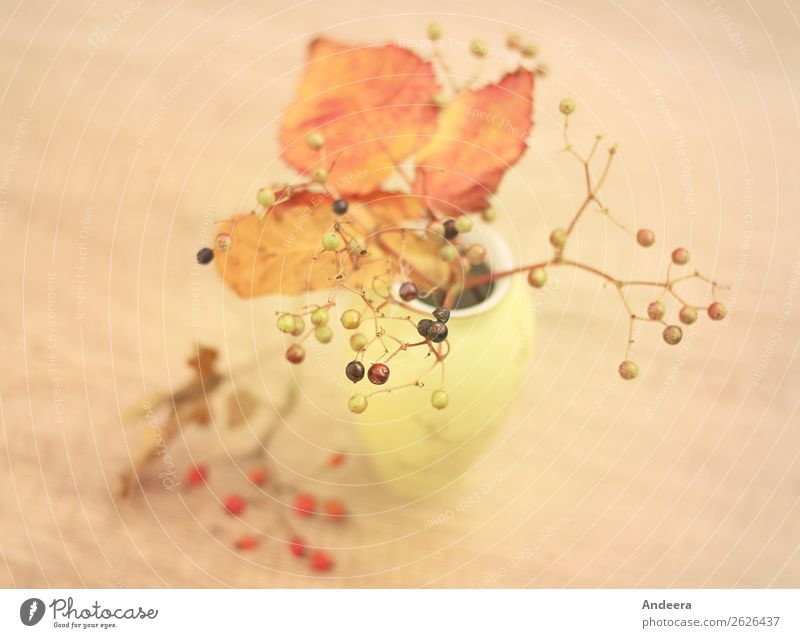 Autumnal still life with vase and plants Flat (apartment) Thanksgiving Nature Plant bushes flaked Wild plant Decoration Uniqueness natural Retro Dry Brown