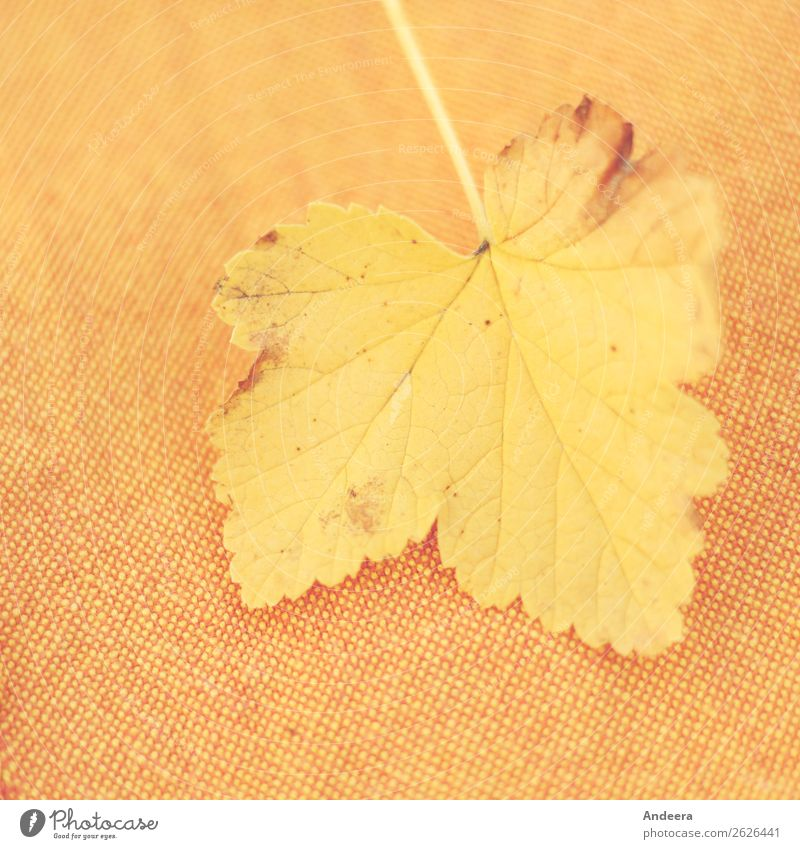 Yellow leaf on orange-brown-yellow fabric Environment Nature Plant Autumn Climate Weather Drought flaked To fall Dry Warmth Orange Transience Change Seasons