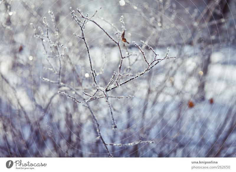 winter goodbye Nature Plant Winter Beautiful weather Ice Frost Snow Bushes Cold White Glittering Twig Frozen Blur Colour photo Exterior shot Close-up Detail