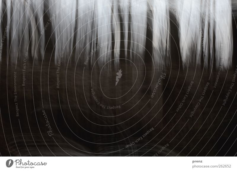 I see the forest Environment Nature Landscape Tree Forest Line Brown Gray Black Colour photo Exterior shot Structures and shapes Day Blur Central perspective
