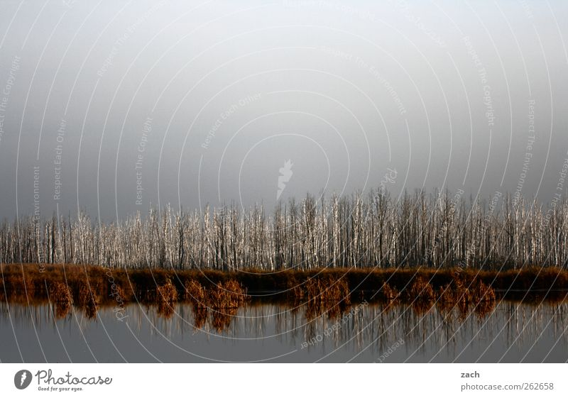 tribal assembly Nature Landscape Water Sky Autumn Winter Plant Tree Birch tree Birch wood Lakeside Dark Gray Apocalyptic sentiment Transience Exterior shot