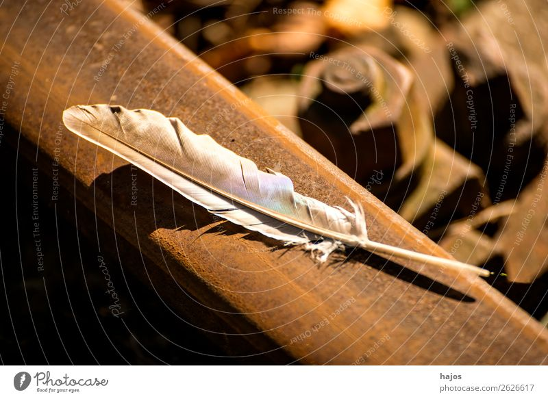Nature Feather Soft