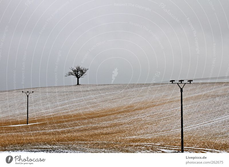 Nature Tree Plant Winter Loneliness Environment Landscape Snow Wood Weather Field Energy industry Hill
