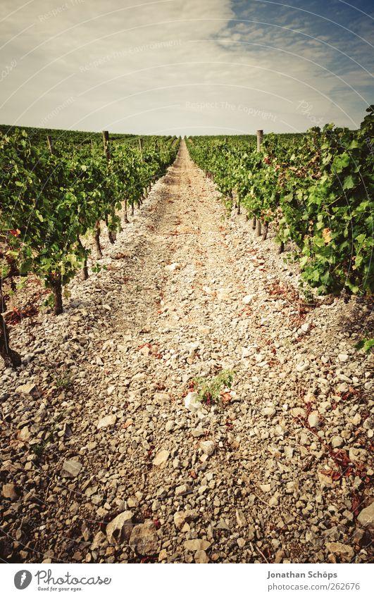 Nature Plant Summer Far-off places Environment Landscape Freedom Warmth Lanes & trails Horizon Arrangement Vine Middle To enjoy Row France