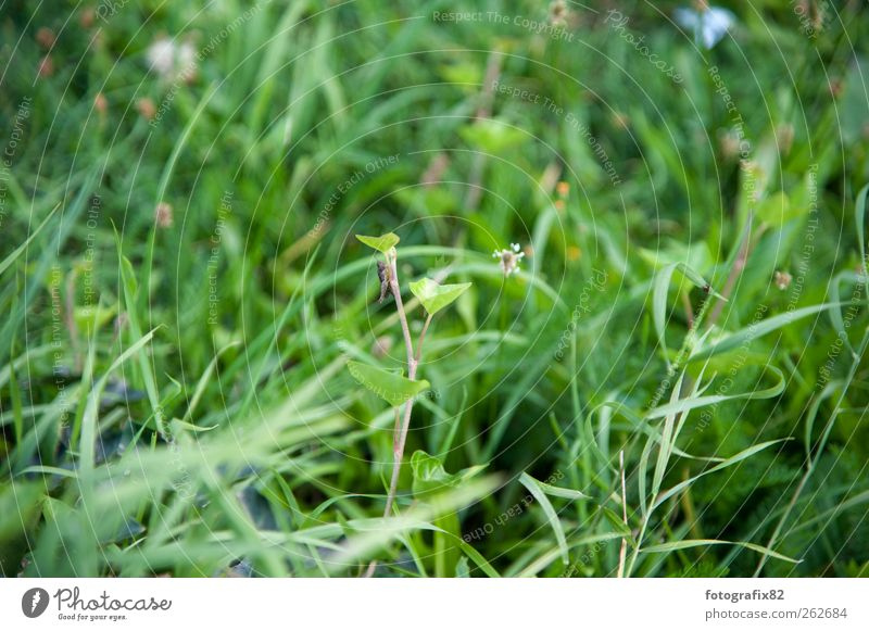 grass green Environment Nature Plant Animal Summer Beautiful weather Grass Bushes Leaf Foliage plant Garden Park Meadow Farm animal Beetle Movement Flying