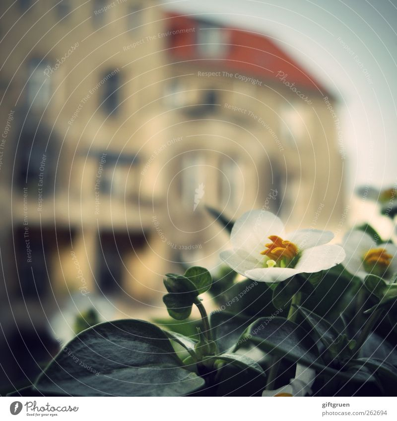 city kid Town House (Residential Structure) Manmade structures Building Facade Balcony Window Roof Green White Flower Flowering plant Plant Balcony plant