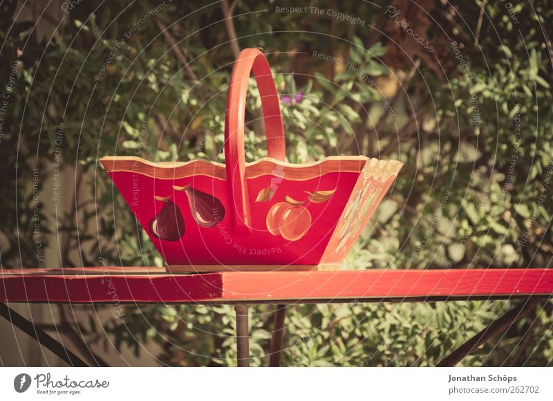 Green Beautiful Red Plant Wood Happy Contentment Fruit Esthetic Table Living or residing Bushes Kitsch To enjoy Craft (trade) Collection