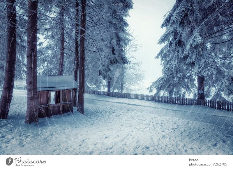 Uncle Tom Nature Winter Fog Ice Frost Snow Tree Forest Hut Lanes & trails Cold Blue Black White Moody Calm Relaxation Idyll Wooden hut Snowscape Fence
