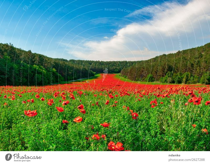 Valley with many blooming red poppies Vacation & Travel Summer Garden Nature Landscape Plant Sky Spring Tree Flower Grass Leaf Blossom Meadow Blossoming Fresh