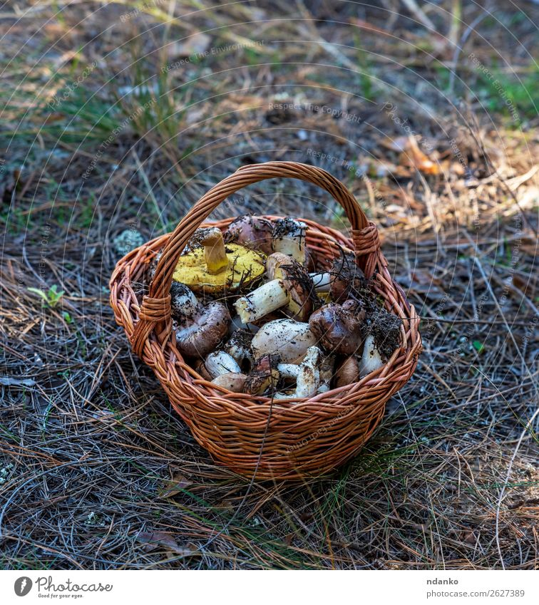 edible wild mushrooms in a brown wicker basket Vegetable Vegetarian diet Nature Autumn Grass Forest Fresh Natural Wild Brown Yellow Green White background