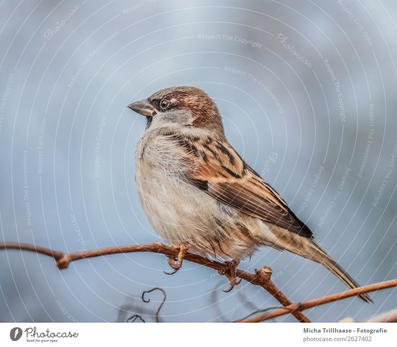 sparrow on a branch Nature Animal Sunlight Beautiful weather Tree Twigs and branches Wild animal Bird Animal face Wing Claw Sparrow Passerine bird Beak Eyes